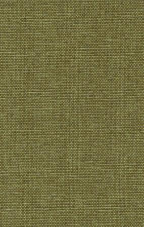 Olive 53